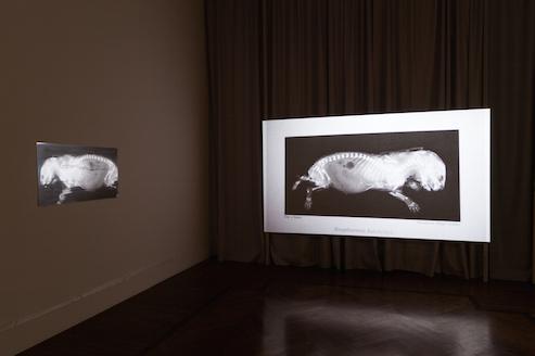 Lina Selander – veduta della mostra presso la Galleria Tiziana Di Caro, Napoli 2015