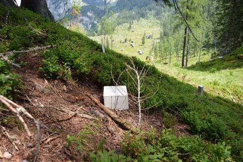 Political Landscape - Angelika Loderer, Larches and Stones