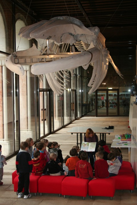 Venezia, Museo di Scienze Naturali, letture animate