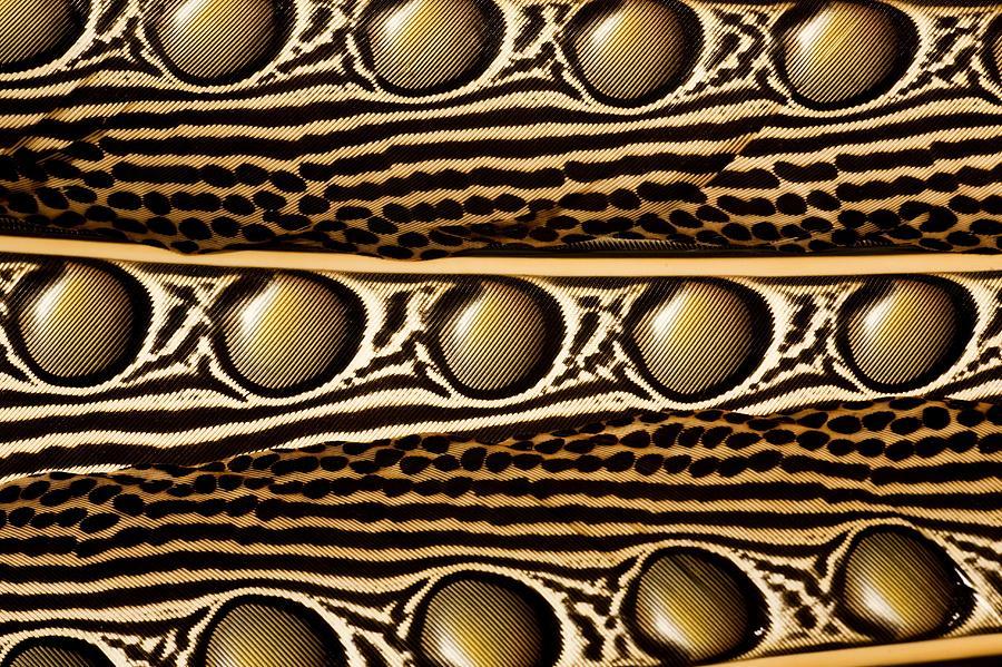 Particolare di una penna di fagiano Argo