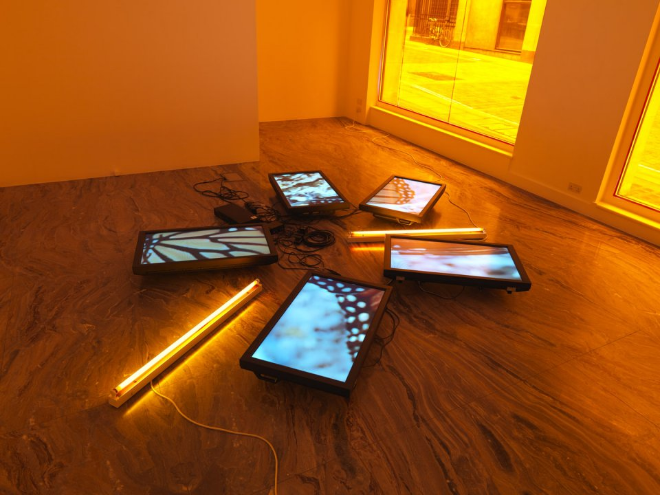 Diana Thater, Untitled (Butterfly Videowall #2), 2008