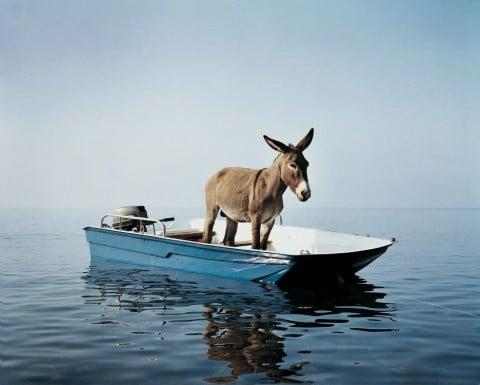 Paola Pivi, Untitled (Donkey)