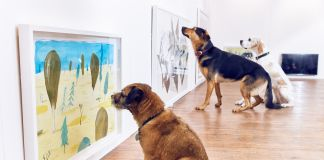 Interactive Art Exhibition for Dogs