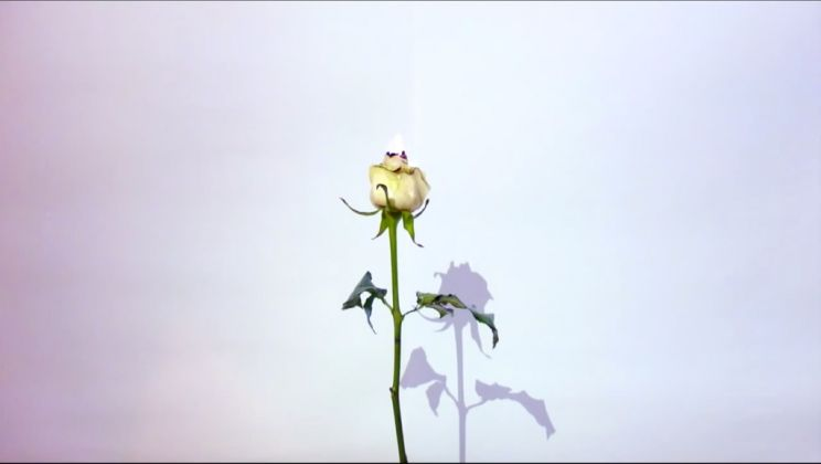Jumairy, Aconite, 2015 - still from video