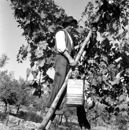 Georgina Masson, Grape-gathering, Soriano nel Cimino, 1950–65 - Photographic Archive, American Academy in Rome