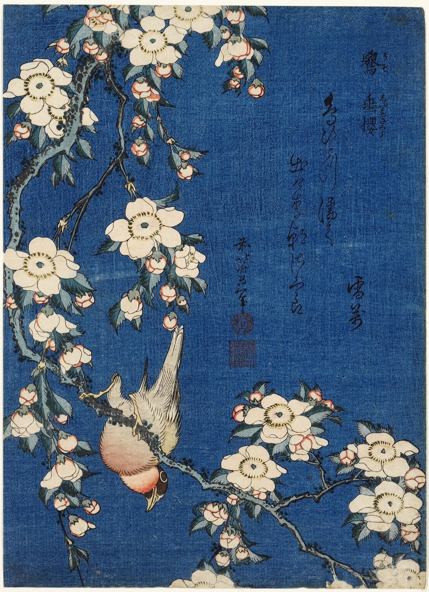 Katsushika Hokusai, Cardellino e ciliegio piangente, dalla serie Piccoli  fiori, 1832 ca. \u2013 Honolulu Museum of Art