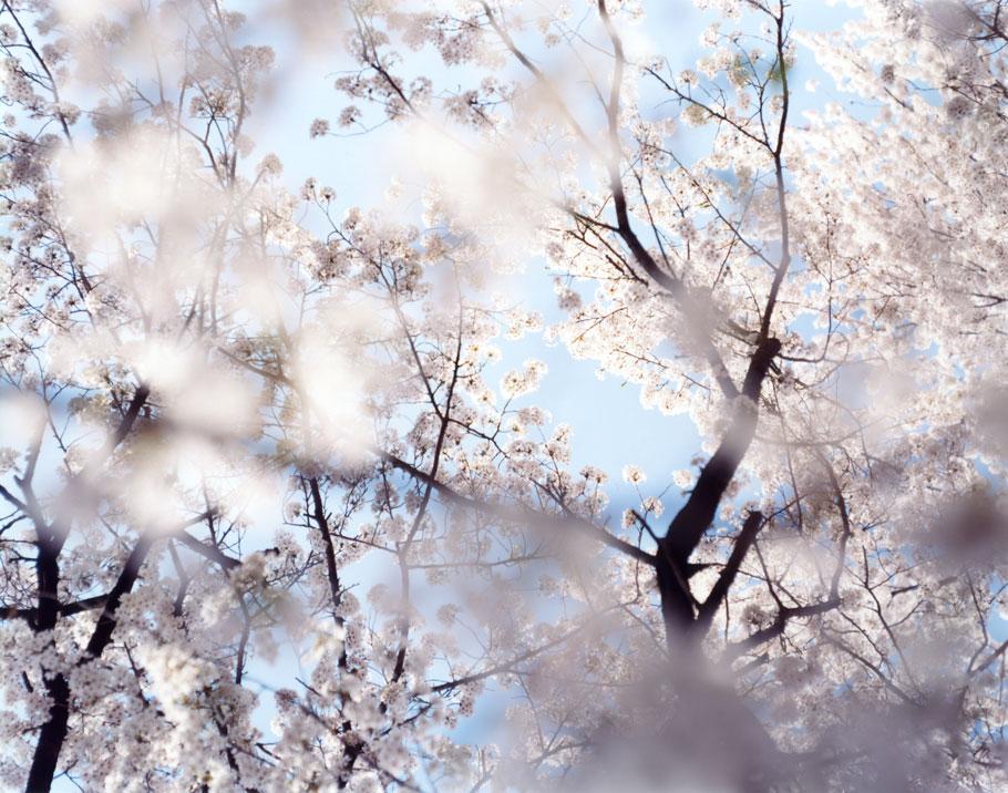 Risaku Suzuki, serie Sakura N. 51, 2003