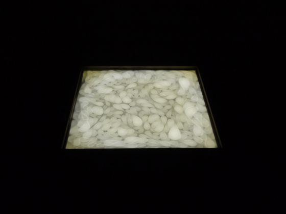 Marco Marzuoli, Senza titolo, 2016. Museolaboratorio, Città Sant'Angelo 2017. Photo Marco Marzuoli