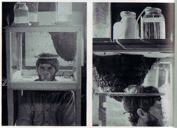 Mark Thompson, Live-In Hive, 1976. Performance