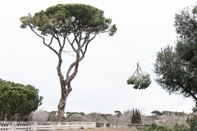 Potatura creativa a Villa Medici, Roma