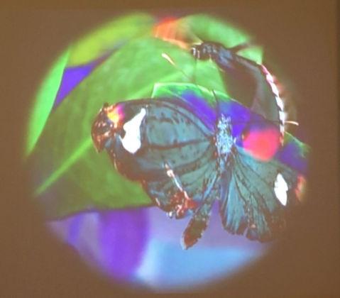Sara Rossi, Lanterna Magica, in loop 46'', 2011, frame dal video