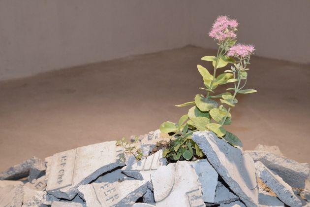 Andrea Francolino, Perfomance di una pianta. The Open Box, Verona 2015. Photo Valentino Albini. Collezione AGI, Verona