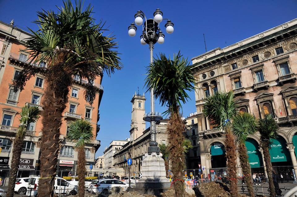 La palme in Piazza Duomo - ph. Fb, Comune di Milano