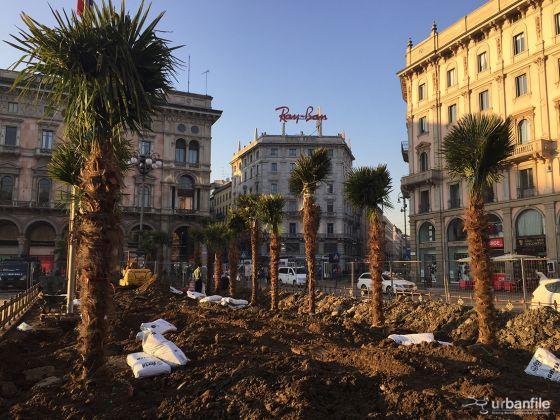 La palme in via di piantumazione a Piazza Duomo, Milano. ph urbanfile