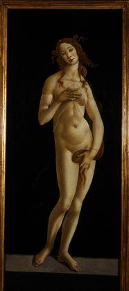 Sandro Botticelli, Torino, Galleria Sabauda, Venere