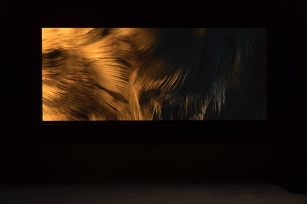 Yuri Ancarani, The Challenge, 2016. Installation view at Zero..., Milano 2017. Courtesy the artist & Zero…, Milano. Photo Roberto Marossi