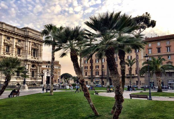 Palme in Piazza Cavour, a Roma