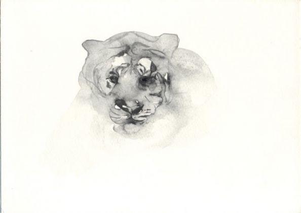 Ada Mascolo, Tigre