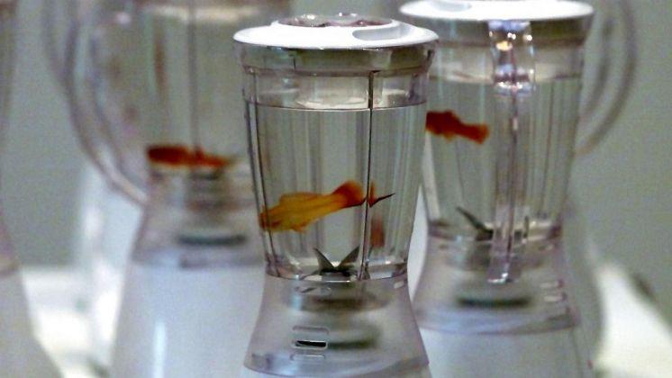 Marco Evaristti, Helena, frullatori, pesci rossi, 2000, photo Palle Hedemann/Scanpix Nordfoto