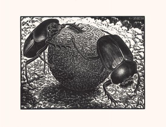 Maurits Cornelis Escher, Scarabei