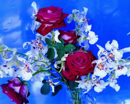 Nobuyoshi Araki, dalla serie Flowers, © l'artista