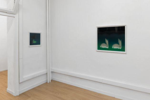 Dana Lok. Soft Fact. Installation view at Clima Gallery, Milano 2017. Photo Marco Davolio