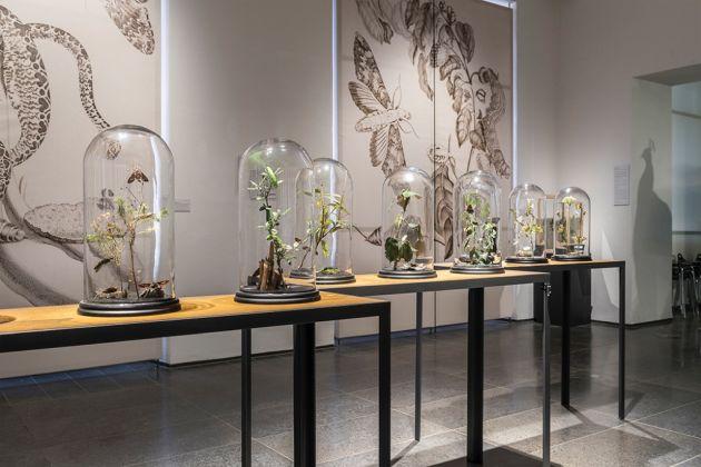 Maria Sibylla Merian. Exhibition view at Museum Wiesbaden, 2017. Photo © Museum Wiesbaden / Bernd Fickert