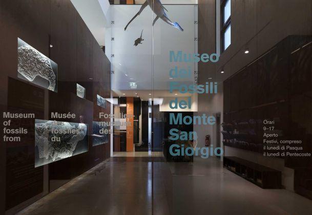 Museo dei Fossili del Monte San Giorgio, Meride