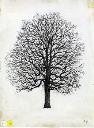 Quercus cerris (inverno), 1978–1982. China su lucido, 50 x 62 cm. Courtesy Archivio Architetto Cesare Leonardi