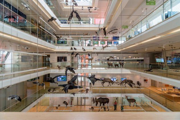 MUSE–Museo delle Scienze di Trento. Photo Matteo De Stefano