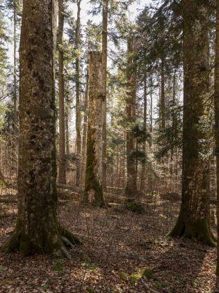 Occupying Woods, FARAWAY, SO CLOSE, BIO 25, photo: Delfino Sisto Legnani e Marco Cappelletti