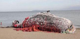 La scultura-balena di Greenpeace a Naic, Filippine