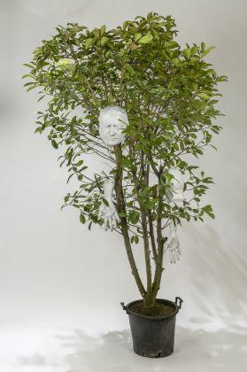 Marc Quinn, My ever changing moods VIII, 2007, pianta vegetale e materiali vari