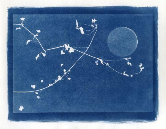 Buio Luce e Meraviglia. I piccoli fragilissimi mondi di Alice Serafino, Elena Salamon Arte Moderna, Torino