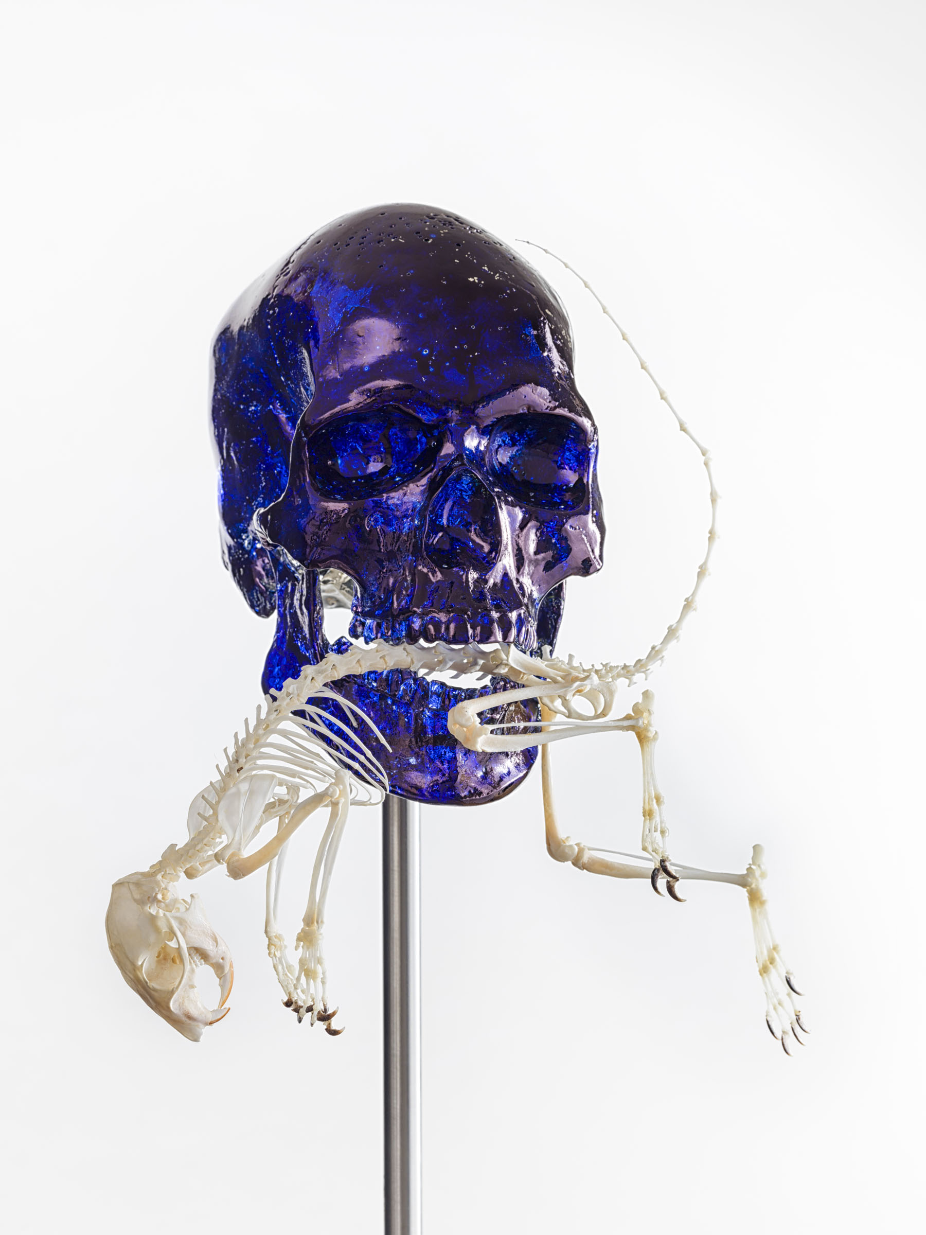 Jan Fabre, Skull with squirrel, 2017