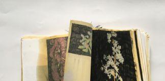 Elena Hamerski, Piante medicinali e velenose della flora italiana, 2015-2017, polittico + libro d'artista, olio di lino, pastelli acquerellabili e carbone su carta, dimensioni variabili