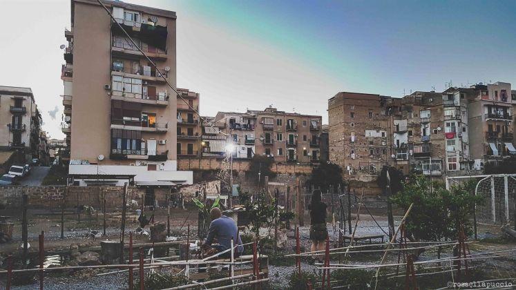 L'orto sociale e fattoria didattica all'imbrunire, Danisinni, Palermo, photo Rossella Puccio