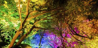 teamLab, Resonating Forest, Cherry Blossoms and Maple