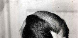 Marcelle Duchamp, Tonsura, Man Ray
