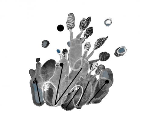 Spore, Micromega level 3 serie
