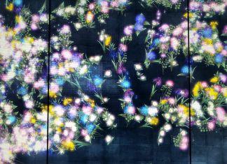 teamLab, Flowers and people. Dark, 2015