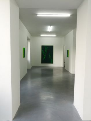 Daniel Lergon. Unter Grün. Exhibition view at Galleria Mario Iannelli, Roma 2017
