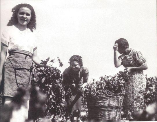 Giuseppe Palumbo, Contadine vendemmiatrici, 1940