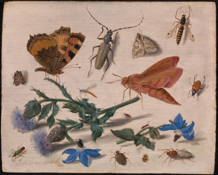 Jan van Kessel the Elder, Butterflies, Moths and Insects with Sprays of Creeping Thistle and Borage, 1654, Gift from the collection of Willem Baron van Dedem, 2017 © The National Gallery, London