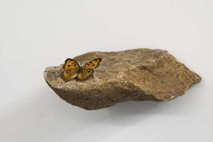 Butterfly Lounge sito di incontri