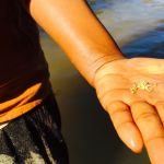 Le pietre di Ollone & Ollone dal Madgascar