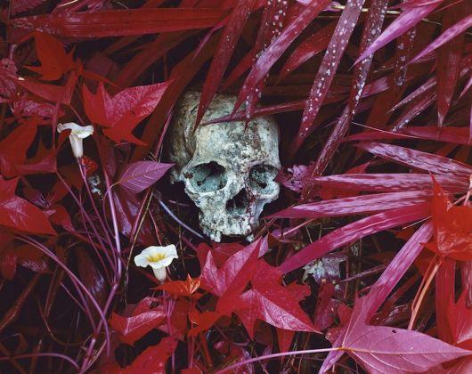 Richard Mosse , Of lilies, 2012. Collezione Roberto Spada