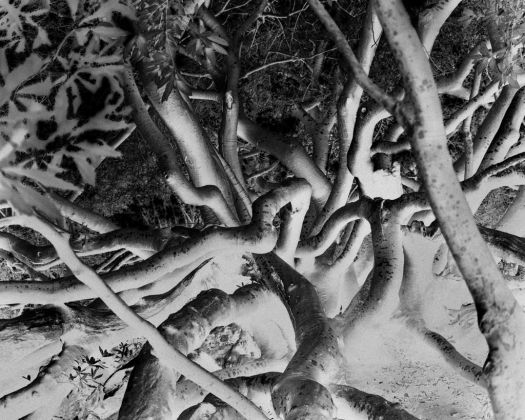 Uriel Orlow, The Memory of Trees, 2016, courtesy of the artist