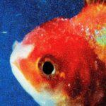 Vince Staples, Big Fish Theory (2017)