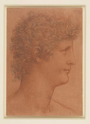 The head of a youth, c.1510, red and black chalks on orange red prepared paper